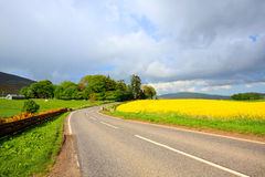 Road in the conutry with Rape fields Stock Photography
