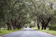 Road among cork oaks in portugal Stock Images