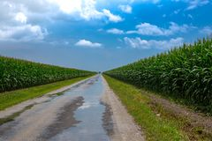 Road through corn field. stock images
