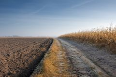 Road through Corn Field and plow Stock Image