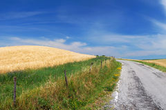 Road through cornfields. Drive in the middle of nature Royalty Free Stock Image