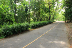 Road corridors in forest Stock Photo