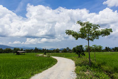Road Cottage and green rice field in Thailand, Asia Stock Photo
