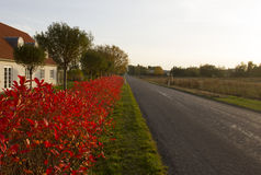 Road. Country road in early autumn Royalty Free Stock Photos