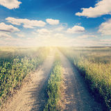 Road in country and field with sunlight. Stock Images