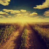 Road in country and field with sunlight. Stock Photography