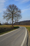 Road in countryside. Scenic view of road receding past tree in countryside with forest in background Royalty Free Stock Photos