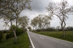 Road through the countryside Royalty Free Stock Images