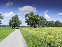 Road through countryside Stock Images