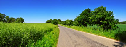Road in the countryside Stock Images
