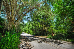 Road in the countryside in hdr Royalty Free Stock Photos