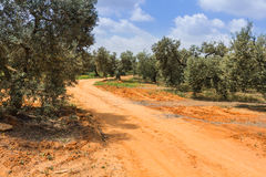 Road at countryside Royalty Free Stock Images