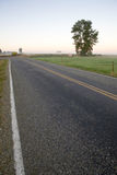 Road in the countryside. With the morning light Royalty Free Stock Images