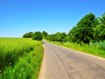 Road in the countryside at summertime Royalty Free Stock Photo