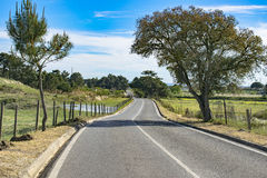 Road in the countryside. Road trees in the countryside Stock Photos
