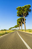 Road in the countryside. Road in the Tuscan countryside (Italy Royalty Free Stock Image