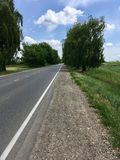 Road. In countryside and willow Royalty Free Stock Image
