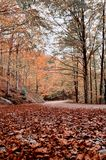 Road covered by dry leaves Stock Photography