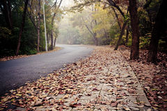 Road covered with fallen leaves Royalty Free Stock Images