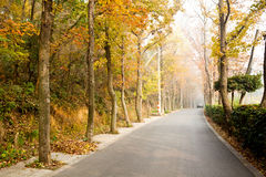 Road covered with fallen leaves Royalty Free Stock Photo