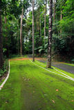 Road covered with green moss Stock Images