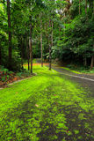 Road covered with green moss Stock Photography