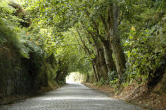 Road covered by lush green trees Stock Photo