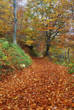 Road covered by red leaves Stock Photo