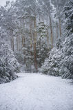 Road covered with snow in eucalyptus forest in Australia Stock Photos