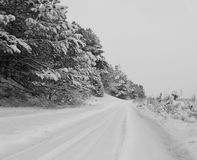 Road covered with snow Stock Images