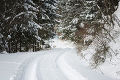 Road covered in snow through a winter forest Stock Photography