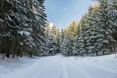 Road covered in snow through a winter forest Stock Photo