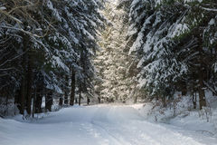 Road covered in snow through a winter forest Stock Photos