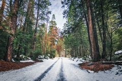 Road covered with snow at winter - Yosemite National Parl, California, USA stock photos