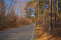 Road covered with yellow leaves Stock Image