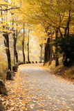 Road covered by yellow leaves. Road into the wood in autumn covered by yellow  leaves Royalty Free Stock Image