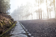 Road with cracked road markings in a foggy forest Royalty Free Stock Image