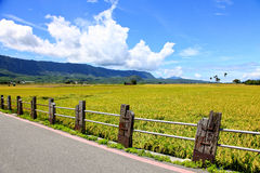 Road cross the rice field in Taidong,Taiwan Royalty Free Stock Photo