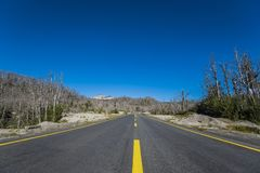 Road that crosses the dead forest from the eruptions of the Puyehue volcano. Forest destroyed by the ashes of a volcanic eruption in the Puyehue National Park royalty free stock image