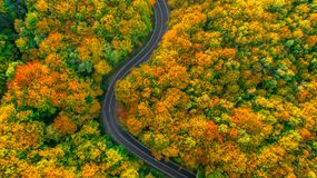 Road winding its way up through thick forest. Road crossing dense forect colored in autumnal colors Royalty Free Stock Image