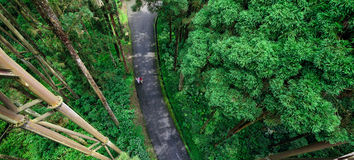 Road Crossing the Forest. Overlook the tourists walking through the forest from the sky walk in Xitou Nature Education Area which is a forest park in Nantou Royalty Free Stock Images