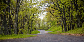 Road crossing spring forest Stock Image