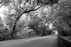 Road on Curacao Royalty Free Stock Photography