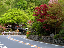 Road curve. A beautiful image of a autumn road in Japan Stock Images