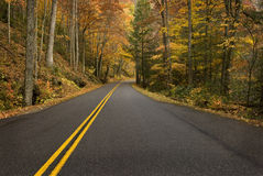 Road Curve in Rainy Mountain Forest Royalty Free Stock Images