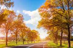 Road curves through autumn trees Royalty Free Stock Image