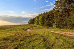 The road curves between pine forest and field. Spring landscape, the road curves between pine forest and field Royalty Free Stock Photos