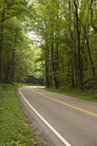 Road curving through forest Royalty Free Stock Photo