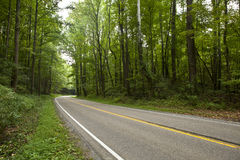 Road curving through forest Royalty Free Stock Image
