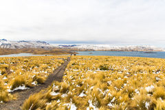 Road Cusco- Puno,Lake Titicaca, Peru,South America. Sacred Valley of  Incas. Spectacular  nature of snowy  mountains and blue s Stock Images